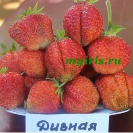 Дивная (Россия)