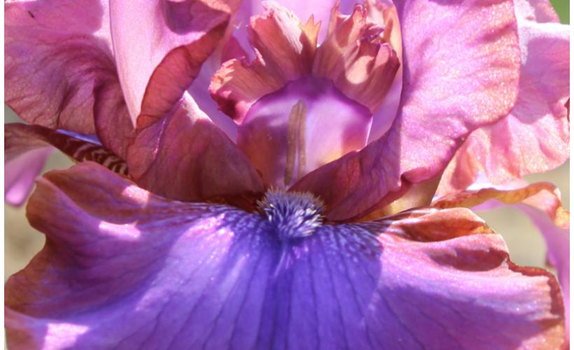 cveti1