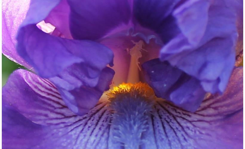 cveti2